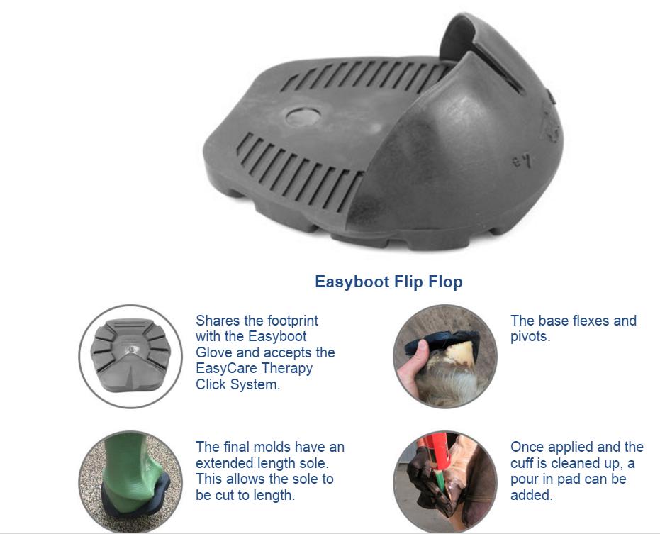 Flip-flop-circle-info